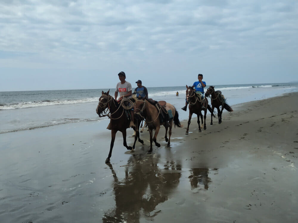 Mancora konie na plaży.