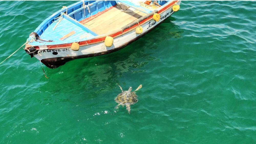 Peru pływanie z żółwami morskimi