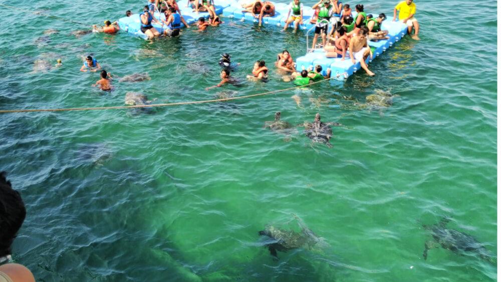 pływanie z żółwiami morskimi w Peru