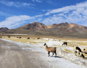 andyjska droga