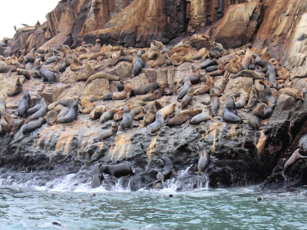 peruwiańskie wybrzeże